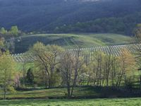 tn_gmv vineyard 2010.jpg
